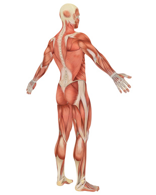 Muscle Pain, Myofacsial Pain, Chicago