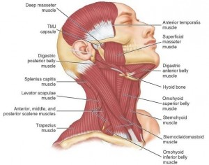 TMJ Muscle Pain: Myofascial Pain, Muscle Spasm and Muscle Splinting All Cause Pain!